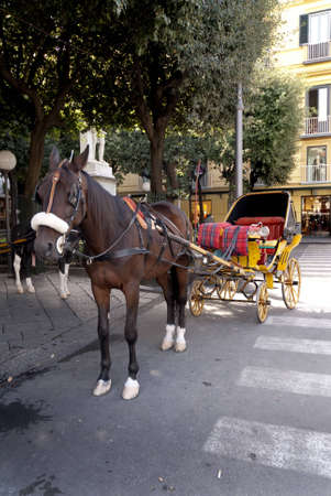 Horse and Carriage in the Piazzo Tasso in Sorrento Italy