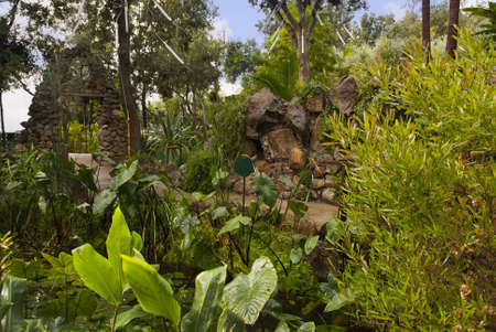 Stunning Tropical Garden on the Volcanic Island of Ischia in the Bay of Naples Italy photo