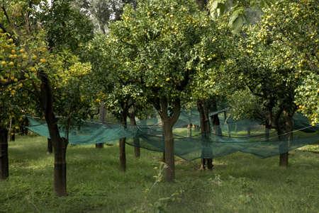 Beautiful Garden in Sorrento Italy Stock Photo - 12537571