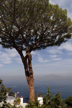 marqueteria: Hermosa terraza con vistas al mar en Sorrento Italia