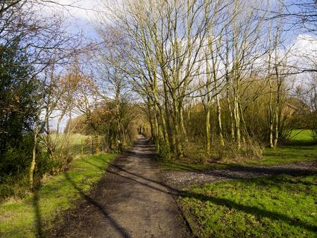 burnley: Spring walk through small woodland in Burnley Lancashire