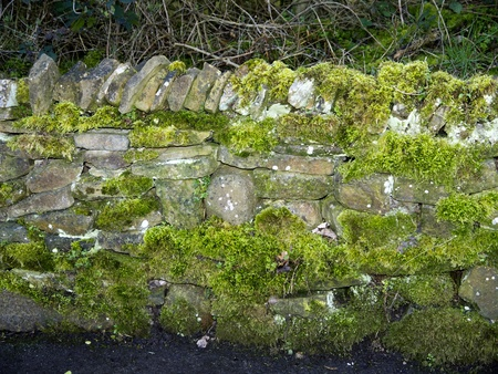 drystone: Drystone Wall covered with Moss in Burnley Lancashire Stock Photo