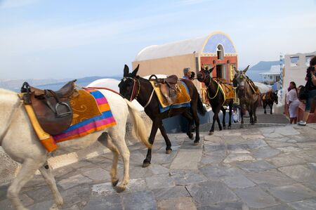 Donkey Transport in Town of Oia on  the Island of Santorini Greece photo
