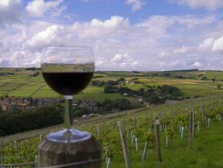 eacute: Vigneto in Holmfirth, l'ultimo del Wine Country Estate nello Yorkshire in Inghilterra