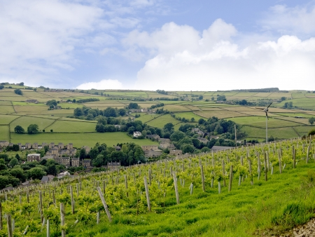 eacute: Vineyard in Holmfirth, the Last of the Summer Wine Country in Yorkshire England Stock Photo