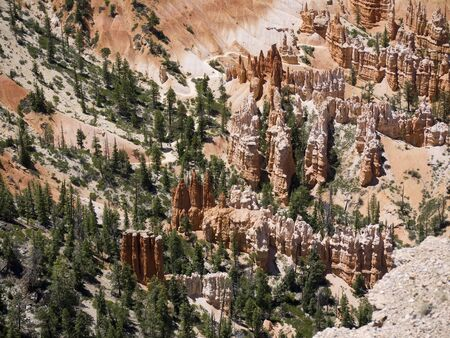 ponderosa: The Hoodos of Bryce Canyon Utah USA