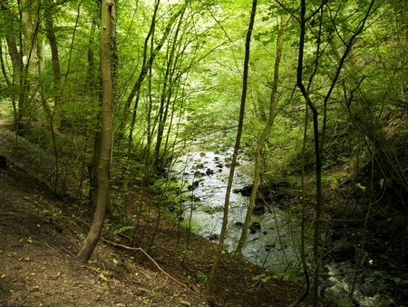 Pool in forest in Skipton North Yorkshire photo