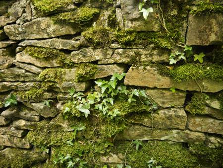 Drystone Wall in Skipton North Yorkshire photo