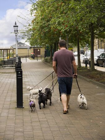 One Man and six dogs in the Spa Town of Ilkley in West Yorkshire England photo