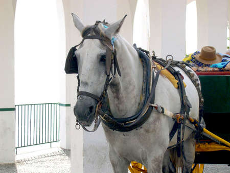 Horse and Carriage on the Balcon de Europa in Nerja Andalucia Spain photo