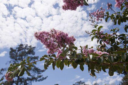 cid: Flowers in Balboa Park in San Diego California USA Stock Photo