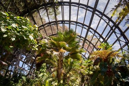 balboa: Trees in Botanical Garden Building in Balboa Park in San Diego California USA