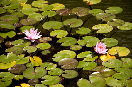 cid: Lily Ponds in Balboa Park in San Diego California USA Stock Photo