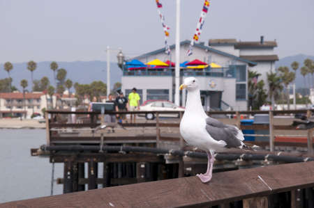 santa barbara: Seagull Pier at Santa Barbara California USA Stock Photo