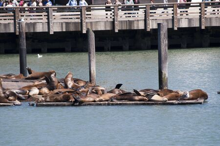 Sea Lions on Fishermans Wharf San Francisco USA photo