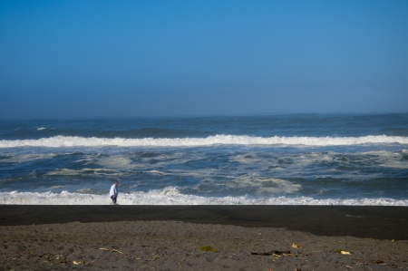 brenda kean: Driftwood Covered Beach on the Pacific Coast of California USA