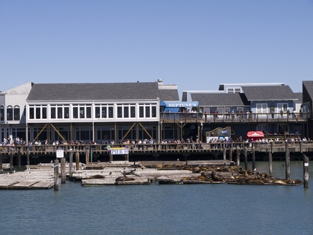 Sea Lions on Fishermans Wharf San Francisco USA