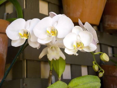 cid: Orchids in Botanical Garden Building in Balboa Park in San Diego California USA