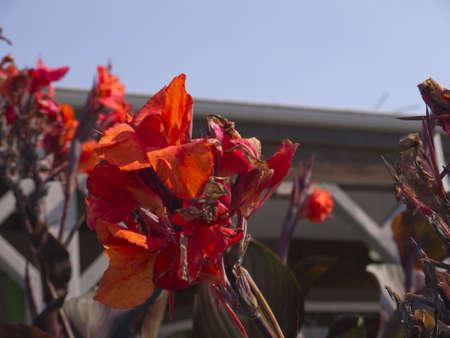 puget: Flowers on Bainbridge Island,Puget Sound ,Washington USA Stock Photo