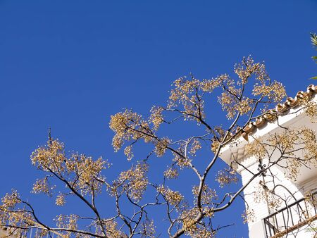 Tree in Nerja Andalucia Spain photo