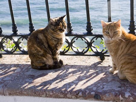 burriana beach: Cats on the Balcon de Europa Nerja Spain Stock Photo
