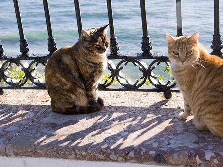 balcon: Cats on the Balcon de Europa Nerja Spain Stock Photo