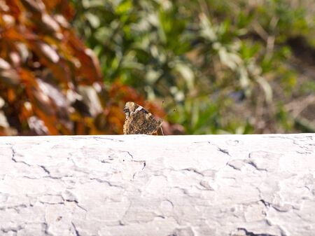 Butterfly in Nerja Spain photo