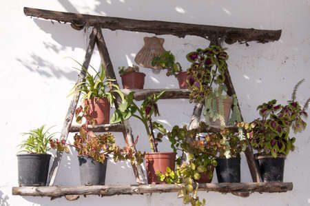 Variety of plants in Frigiliana Spain Stock Photo - 17561768