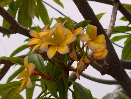 Waxy flowers in Florida USA photo