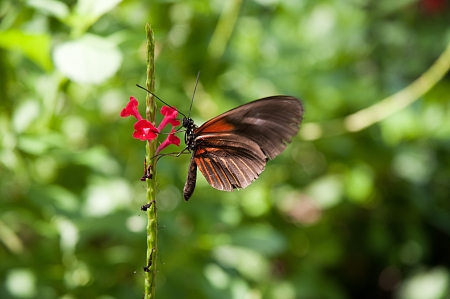 Butterfly House in Key West Florida USA photo