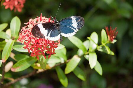 Casa delle Farfalle a Key West Florida USA Archivio Fotografico - 18391873