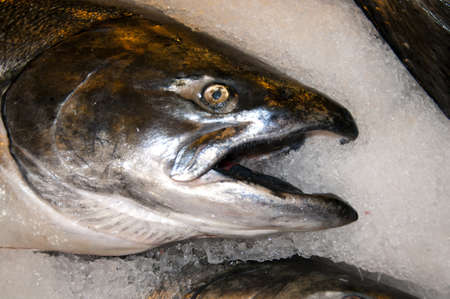 klondyke: Wild Salmon on the Pike Farmers Market in Seattle Washington State USA