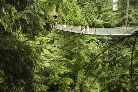 bridge in the forest: The Capilano Suspension Bridge in North Vancouver Canada