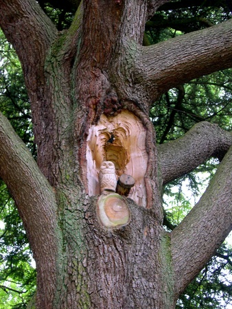 burnley: Owl Carved in Storm Damaged Tree in Towneley park Burnley Lancashire Editorial