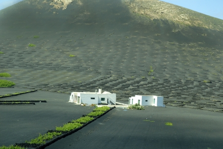 playa blanca: Lanzarote Vineyards to protect the vines from the Harsh Winds of the Canary islands Spain