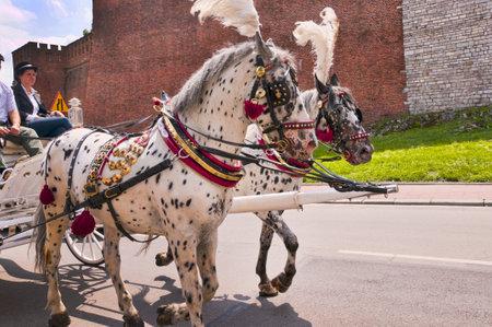 Carriage Ride around the City of Krakow Poland