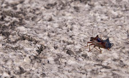 brenda kean: Shield Bug on Wall