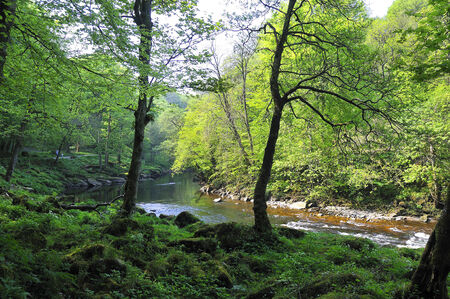 The beautiful valley of the River Wharfe at Bolton Abbey in North Yorkshire photo