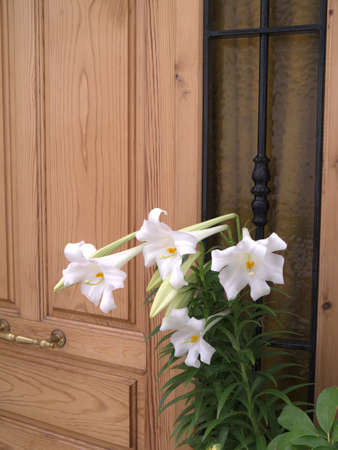 Lilies in Frigiliana in the Alpujarra Mountains in Andalucia Spain photo