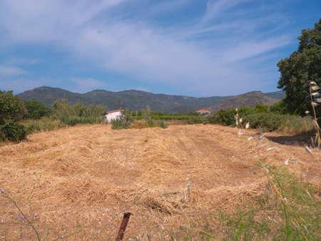 haymaking: Haymaking at Skala Kalloni on the island of Lesvos Greece