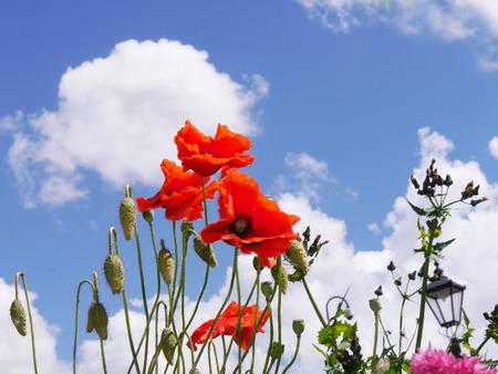 burnley: Wild flowers in Burnley Town Centre Flowerbed