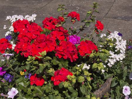 brenda kean: Flowers in Garden of Home  Stock Photo
