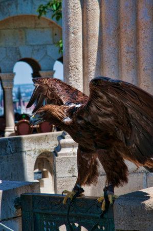 matthias: Eagle on the Fishermens Bastion in Budapest Hungary