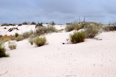 white sands national monument: The Dunes of the White Sands National Monument in New Mexico USA