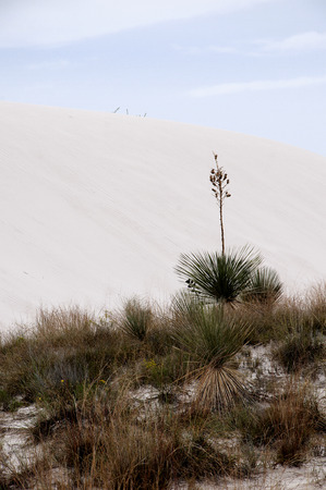 The Dunes of the White Sands National Monument in New Mexico USA photo