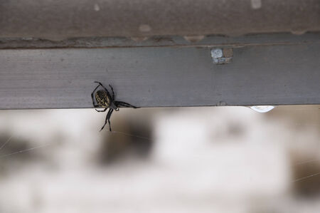 Large Spider on the Walkway in the White Sands National Monument in New Mexico USA photo