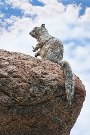 sonora: Squirrel at the Arizona Sonora Desert Stock Photo
