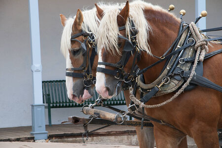 western town: Matched pair of Large Horses pulling a stagecoach around the old Western Town of Tombstone Arizona Stock Photo