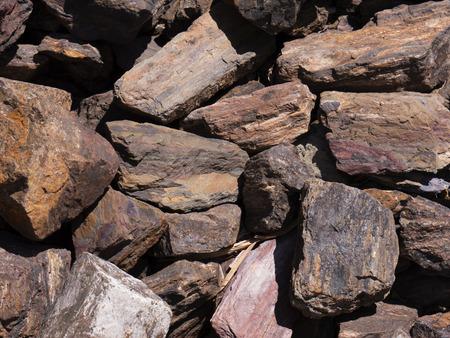 petrified: Petrified Wood in Scottsdale Arizona USA
