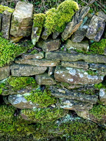 drystone: Moss Covered Drystone Wall built without cement that lasts for hundreds of years in Lancashire England